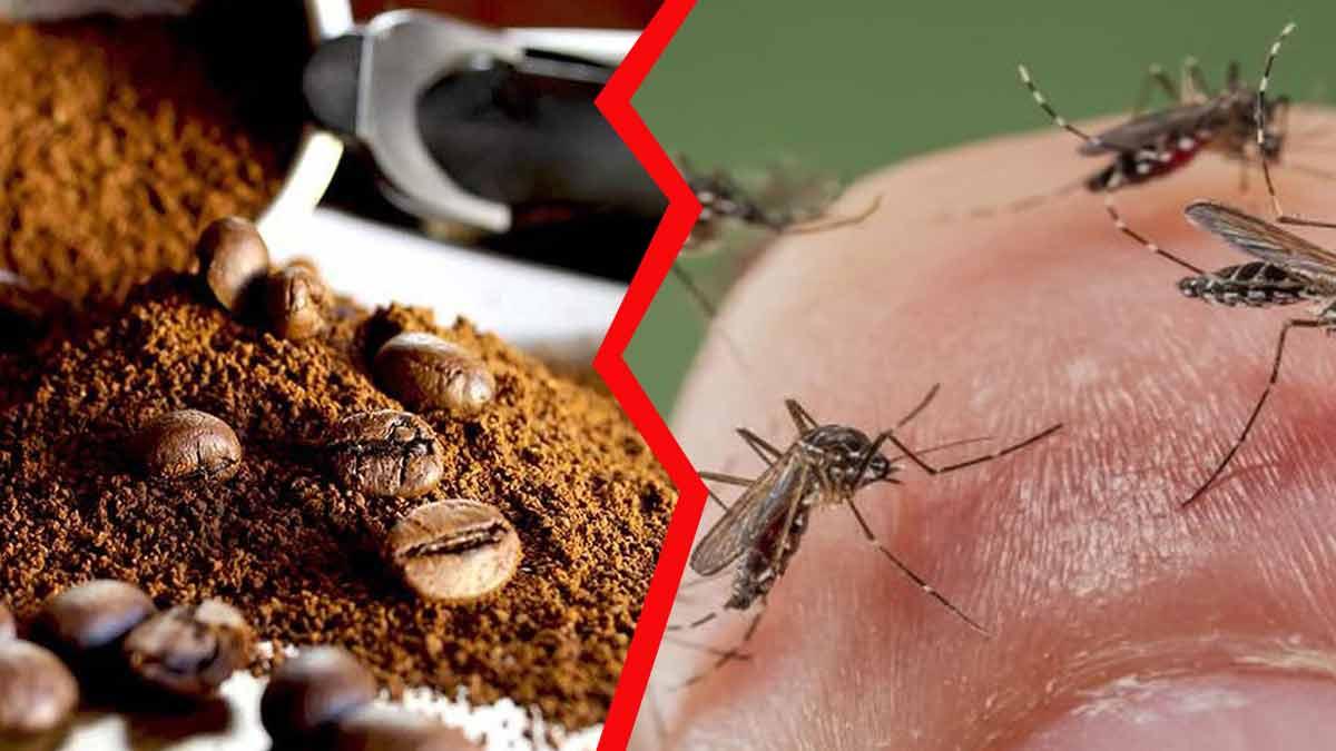 Moustiques : La meilleure méthode pour les chasser carrément avec du Marc de Café !