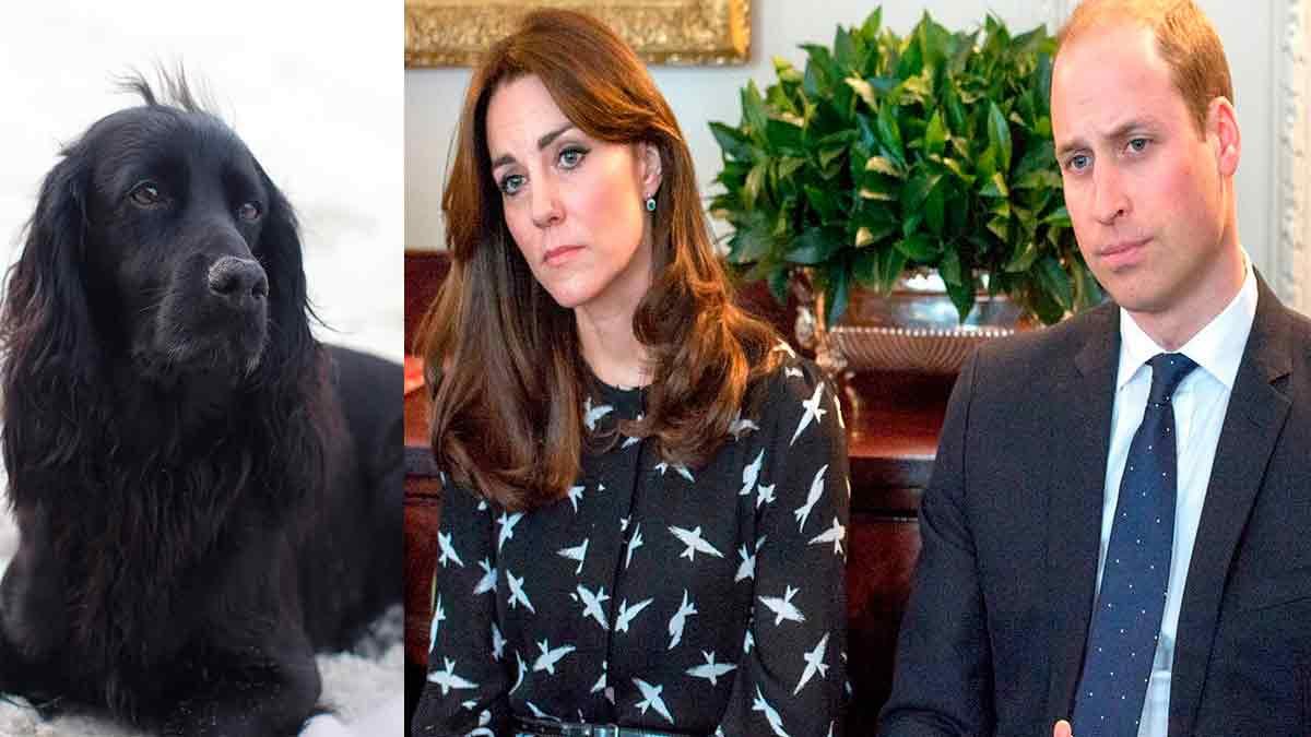 « C'était un membre de la famille » : Kate Middleton et William frappés par un terrible drame !